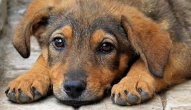 Хорошая ветеринарная клиника в Москве