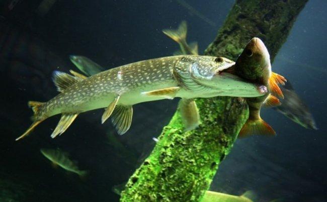 Особенности ловли хищной рыбы с берега: секреты опытных мастеров